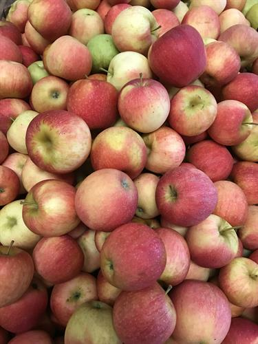 We grow over 24 varieties of apples at Hillcrest.