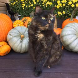 Kitty Dawson