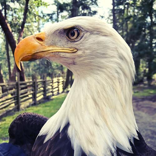 Meet Eddie The Eagle