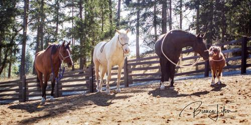 Our Amazing Equine Partners