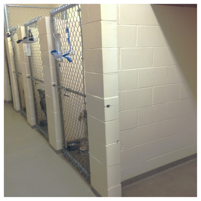 A glimpse of our kennel facility