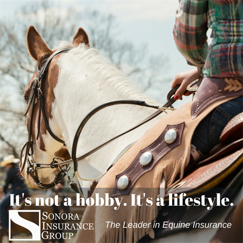 We're the Leader in Equine Insurance!