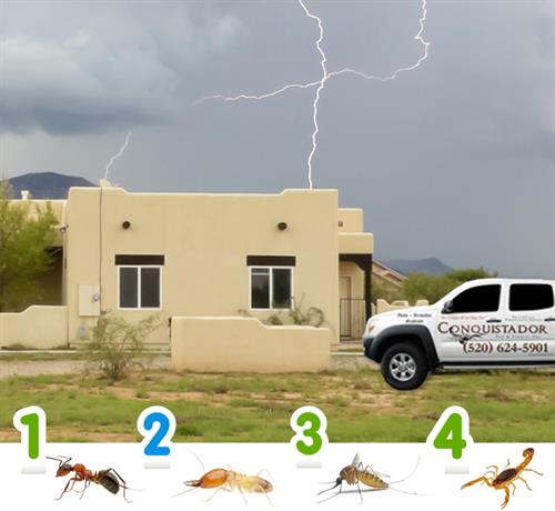 Common pests during heavy monsoon rains.