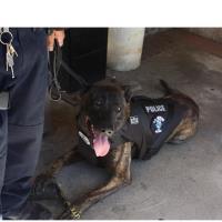 California Pest Management Donates Ballistic Vest to LVPD's Canine Officer