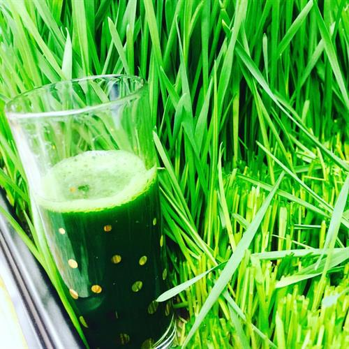 We serve fresh juiced organic Wheatgrass Shots!  Locally grown and certified!