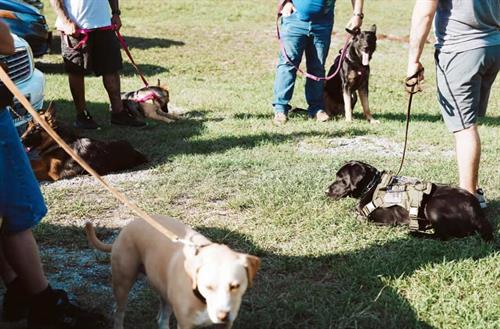 Veteran Service Dog Teams