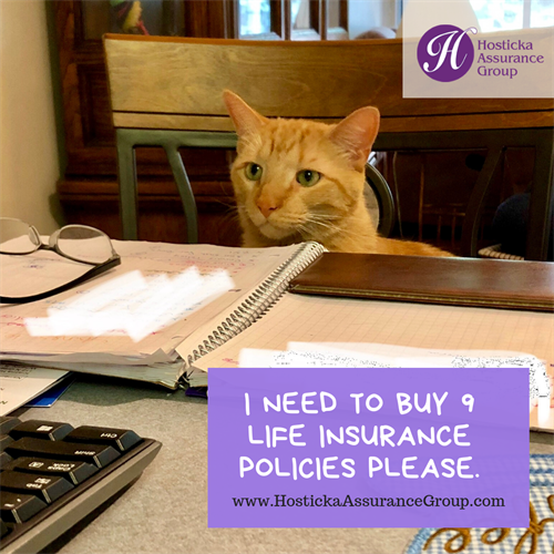 Gallery Image I_need_to_buy_9_life_insurance_policies_please..png