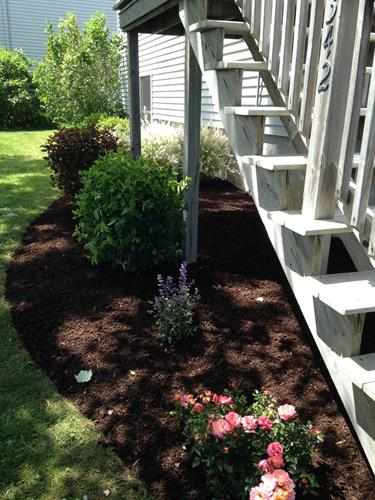 Fresh mulch, edging, and plantings!