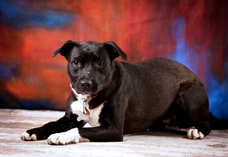 Bree is an adoptable sweetie, see www.luckypuprescue.org for more information.