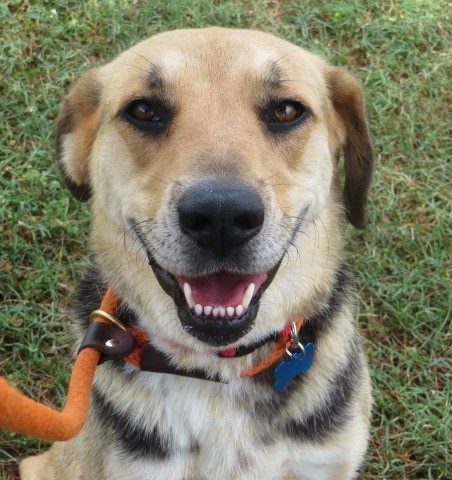 How beautiful is Butterfly? She is available for adoption at www.luckypuprescue.org