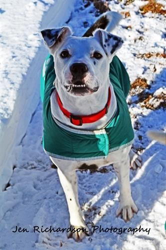 Harvey is a handsome lovebug, available for adoption at www.luckypuprescue.org