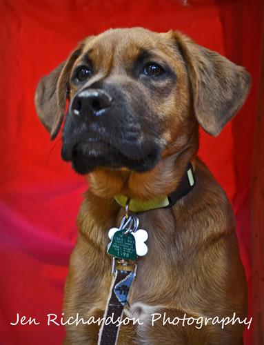 Sloan is available for adoption at www.luckypuprescue.org. He came to us with four siblings and they are 4-5 month old lovebugs!