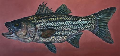 original oil paintings, striped bass