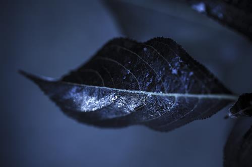 Lip Leaf