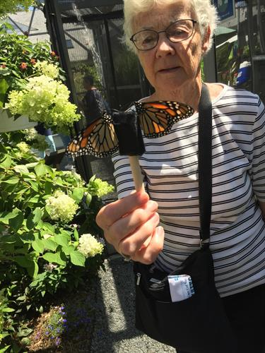 Another excursion - this time feeding the butterflies at Cape Cod Museum of Natural History!