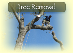 Mason Tree Service