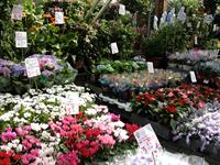 Experience a european flower market