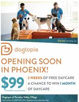 Dogtopia of Paradise Valley Village - Phoenix
