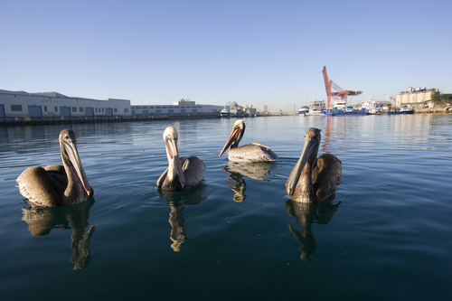 Wildlife abounds in the harbor