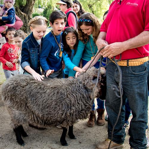 Children experience sheep before shearing demonstration