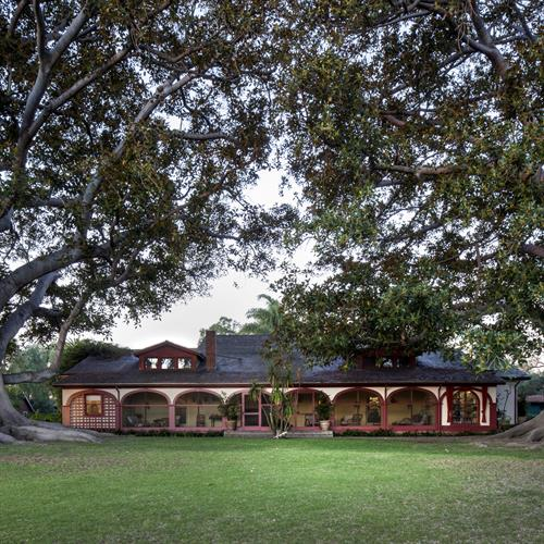 Rancho Los Alamitos Ranch House between Moreton Bay Fig Trees
