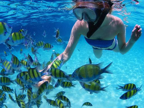 Gallery Image snorkeler-with-fish.jpg