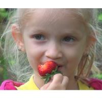 Strawberry Fest at the Fitchburg Farmers Market