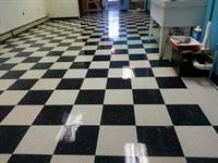 Checkered Shine