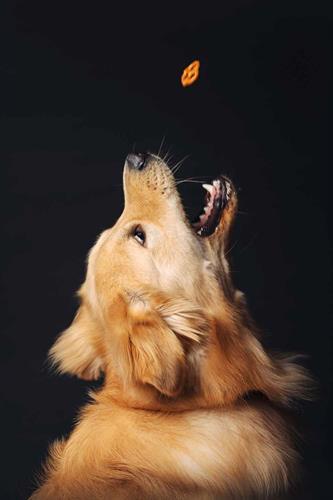 Richboro PA Pet Photography