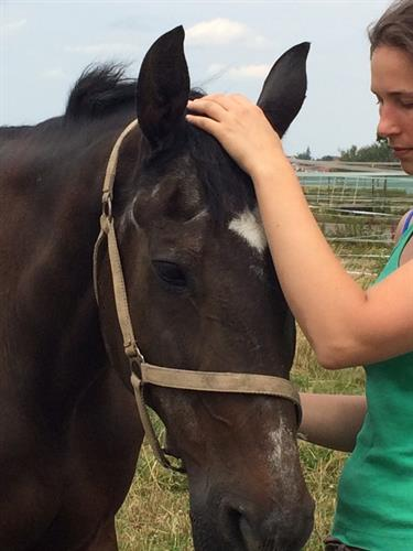 Craniosacral therapy on a horse