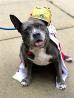 Lily was crowned the Queen of Dogtoberfest this past October, and adopted the following week!