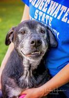 Brandon is just one of the senior animals who found their forever home through the APCSM