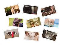 Our Life Is Precious Fund helps animals like these who need extra medical care