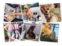 The APCSM helps hundreds of animals - like these alumni - go home every year