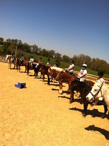 We offer group trail rides and horseback riding lessons.