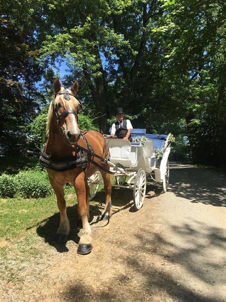 Horse drawn carriage rides at our location or yours!