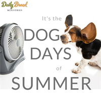 Dog Days of Summer: Our Warehouse is HOT!