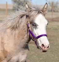 Harley, orphan foal rescued in August 2017