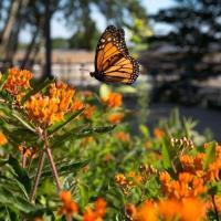 Garden Tours and Workshops  - UW Whitewater Campus