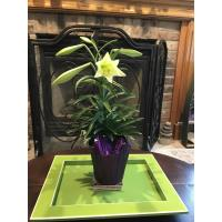 Whitewater Kiwanis Sells Easter Lilies to Fund Transportation for the Whitewater Schools' ELL Summer Reading Program