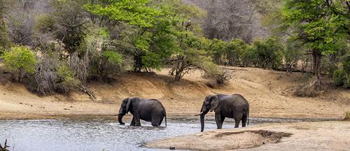 Elephant Safari- Chiredizi, Zimbabwe