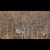 Old Growth Forest Visit - Dehgayasoh Valley Woods, Letchworth