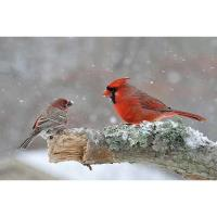 46th Annual Letchworth-Silver Lake Christmas Bird Count