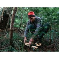 Mushroom Walk