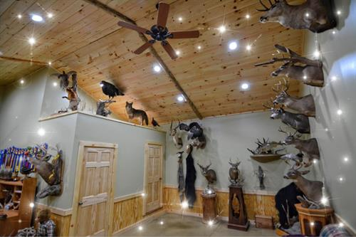 Lane's Taxidermy Showroom