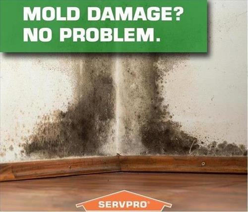If you have a mold problem, we can help!