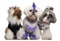 Gallery Image Stylish-Dogs.jpg