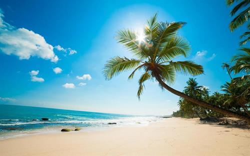 Gallery Image Beach_and_palm_tree.jpg