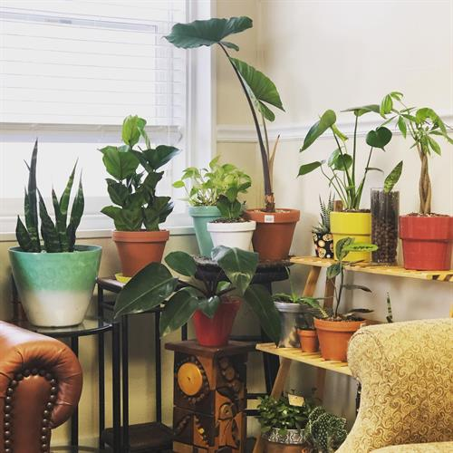 Gallery Image office_plants.jpg