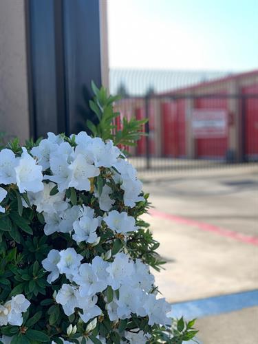 Gallery Image Security_Public_Storage_-_Hayward_Flowers.jpg